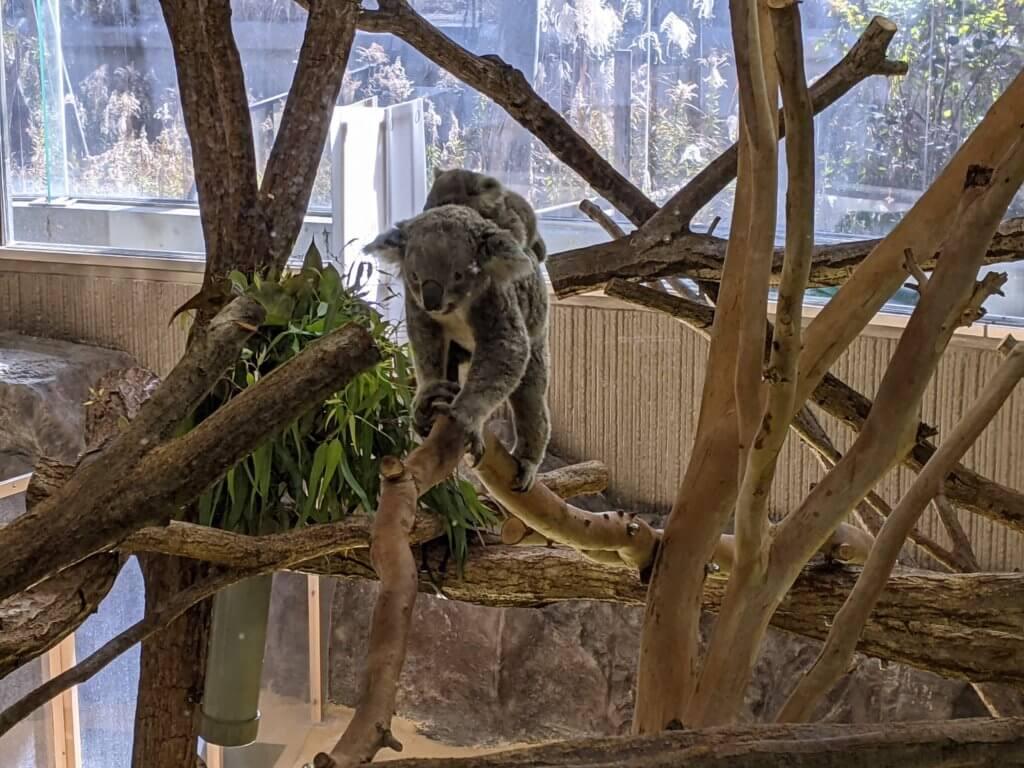 横浜市立金沢動物園ぼたんと赤ちゃん